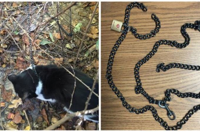 森の中で鎖に繋がれていた猫。死を待つだけだった猫の助けを聞いた女性によって救出される。