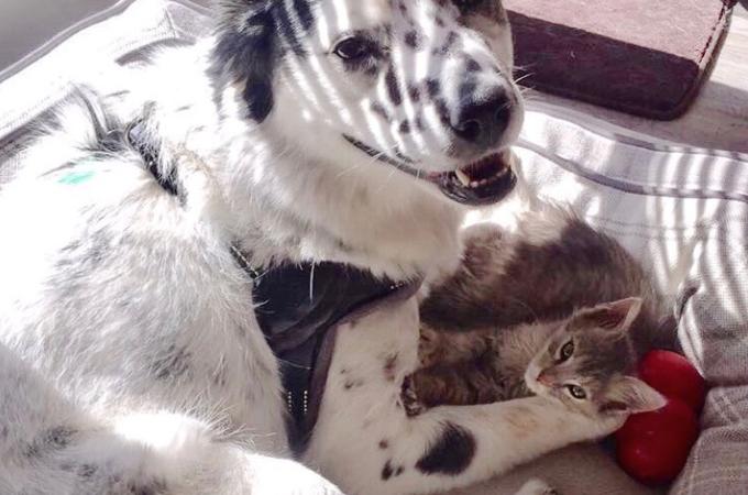 元飼い主によって人間が信じれらなくなった犬。その心を溶かしたのは、病気のみなしごの子猫だった。