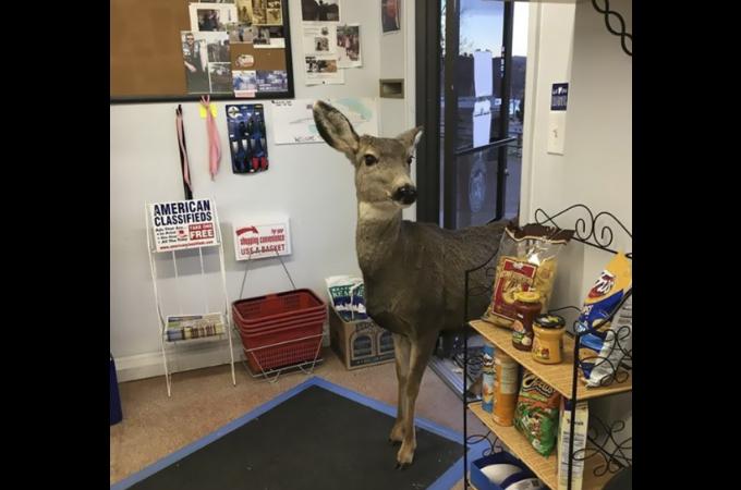 ギフトショップに入ってきた1頭の野生の鹿。その後、鹿は立ち去ると店主は驚きの光景を目の当たりにする。