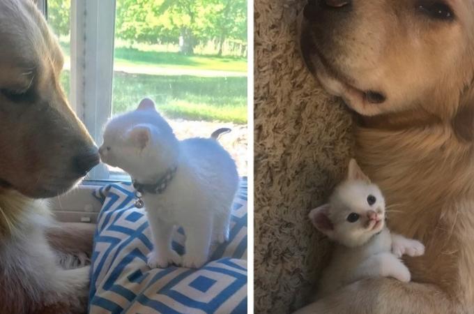 孤独だった真っ白な子猫。新しい家族に迎えられると、最高の親友と出会い毎日を寄り添う。