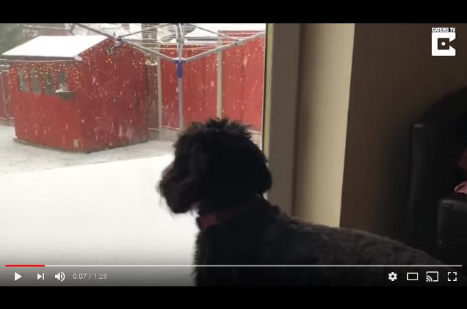 外の雪を目にした犬。抑えきれないテンションを、ドアが開いた瞬間に解放する!