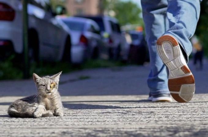 路上で死を待つだけの状態だった子猫。誰もが通りすがるも、その命を救った夫婦の行動に胸を打たれる。