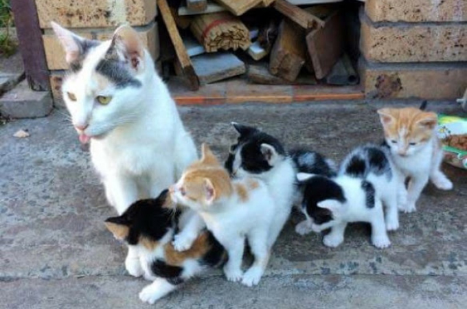 厳しい状況にも関わらず、必死に子猫たちを育てるは母猫。その強さに胸を打たれる。