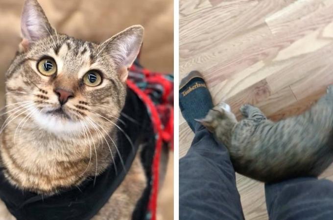 引っ越しが理由で殺処分に持ち込まれるなど、辛い過去を持つ猫が手に入れた幸せとは。