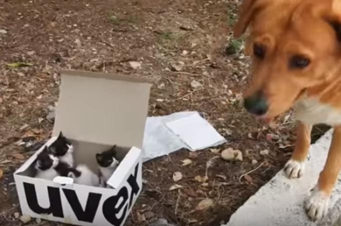 捨て猫を発見した犬。家に連れて帰り、父親の役割を果たし育て始める。そしてその後、子猫たちは。