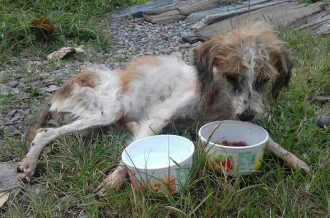 ネグレクトで骨と皮だけの状態で保護された犬。奇跡的に回復し、里親に引き取られた直後に訪れた不幸とは。