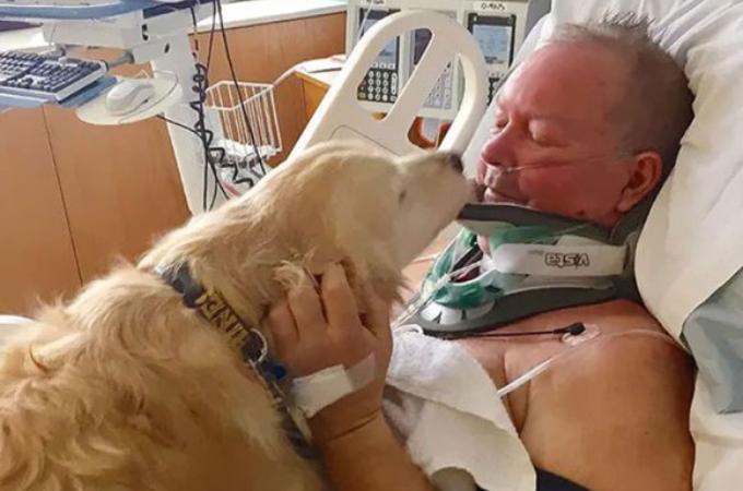 自分の身を投げ出し、または危険にさらしてまでも命がけで人々を救ってくれた10匹のヒーロー犬。