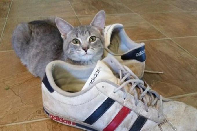 家族に感謝の気持ちを表すために、様々なものを集める猫。その様子がこちら。