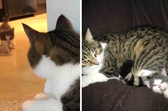 ハリケーンを生き延び、食べ物を探して彷徨っていたところを発見された子猫。その後、手に入れた幸せとは。