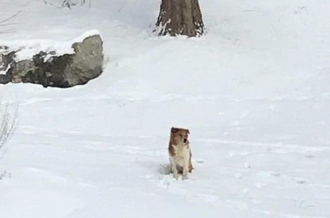 雪の中、二度と迎えに来ない飼い主を待ち続ける犬。厳しい雪によって体重は減り目も開けられないほどに。