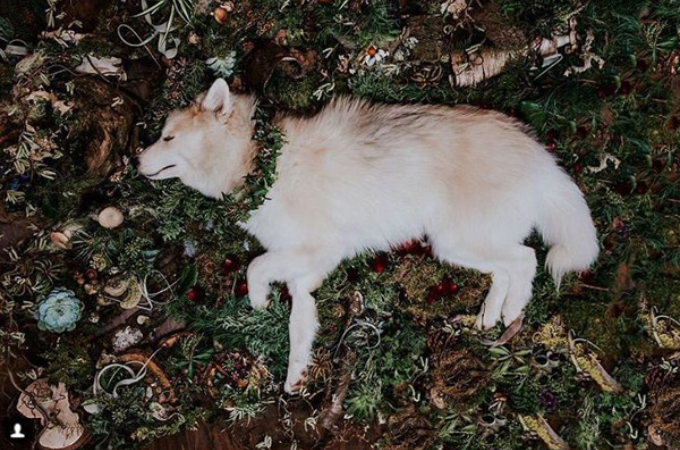生後9ヶ月で亡くなってしまった愛犬に当てた飼い主の手紙。その内容が切ないく海外メディアにも取り上げられる。