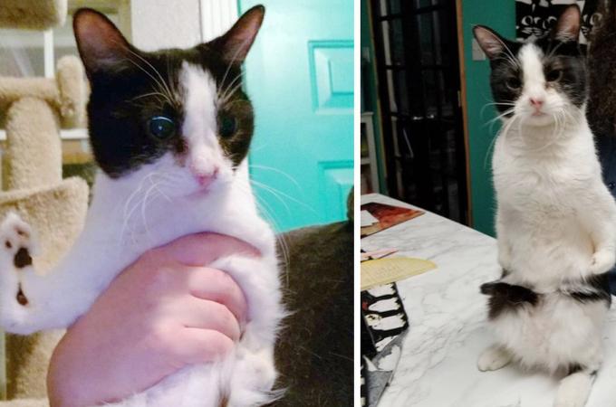 縁に恵まれなかった2つの障がいを持つ猫が、ある夫婦と出会って手に入れた幸せとは。