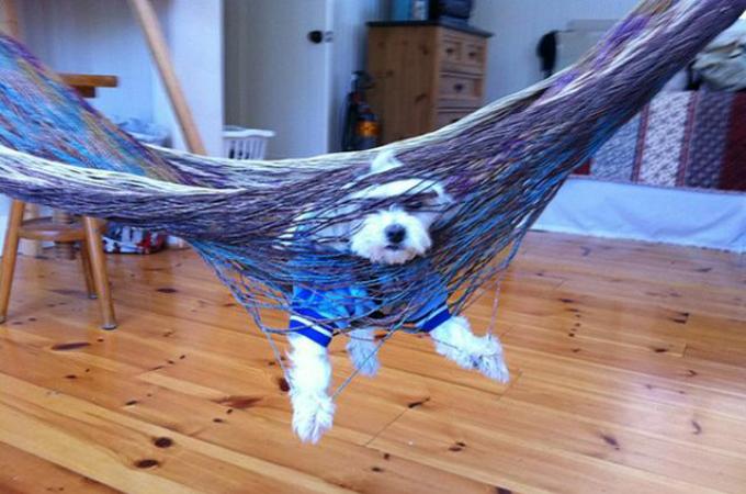 こうなるはずじゃなかった!!自分の行動に後悔しているであろう犬の写真13枚。