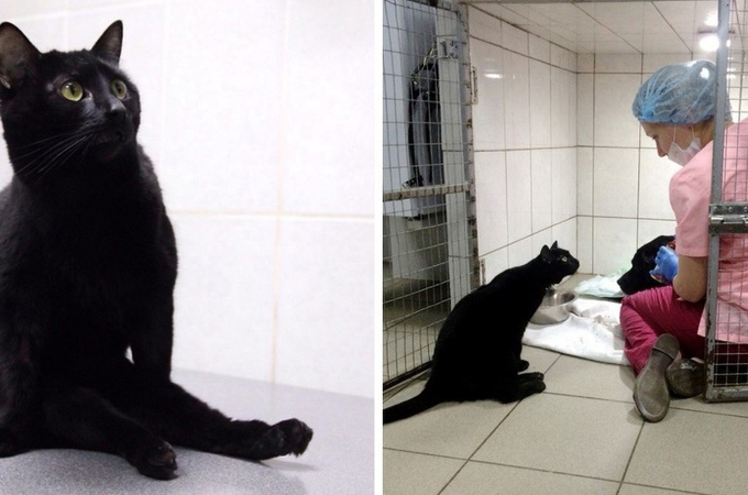 病院で一命を取り留め、足に障がいを抱える黒猫。病院にいる動物たちの不安を取り除くため、日々奮闘する。