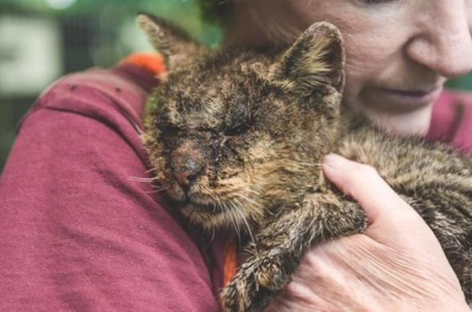 皮膚病でボロボロの猫。目も開けられないほど腫れていた状態から、健康を取り戻し永遠の家族を手に入れる。