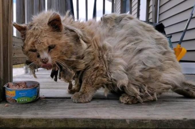 腹ペコだった汚れた野良猫。保護されると、その後手に入れた幸せに思わず心が和む。