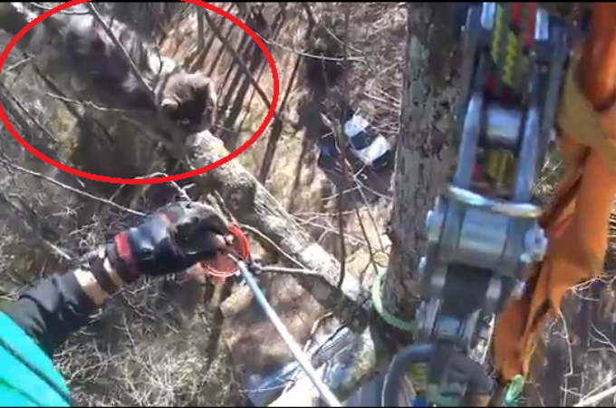 高い木に逃げてしまい、自分で降りられなくなった猫。1週間たち男性によってようやく救出される。
