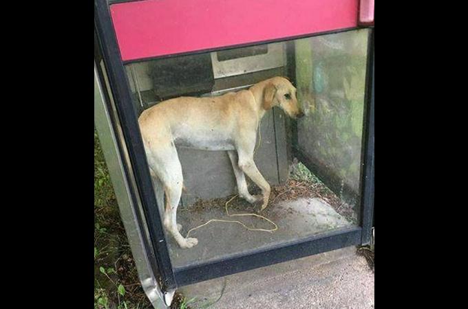 交通事故に遭い、放置された挙句、電話ボックスに捨てられた犬。骨折や傷を乗り越え必死に生きる。