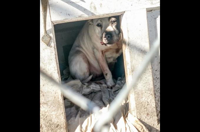 8年間一緒に過ごしてきた飼い主に、捨てられ小屋の中で悲しい表情を浮かべる犬。その姿に胸が苦しくなる。
