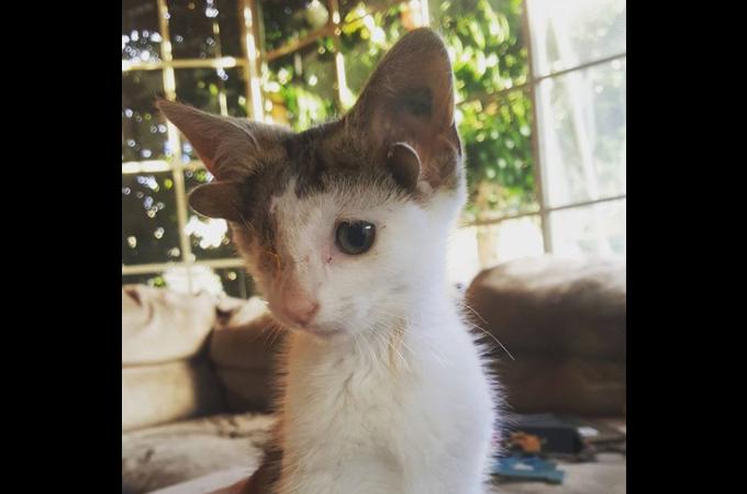 4つの耳を持つ子猫。片目を失うも、手術を乗り越え優しい女性と幸せに暮らす。