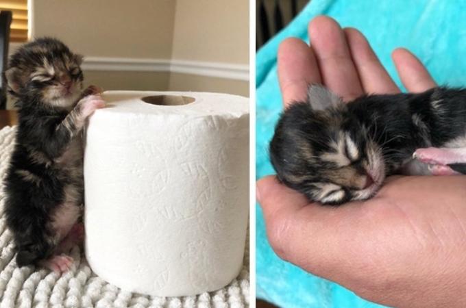小さな命を救うため、懸命に行動し続ける優しい女性。そして命を取り留めた3匹の兄弟猫。