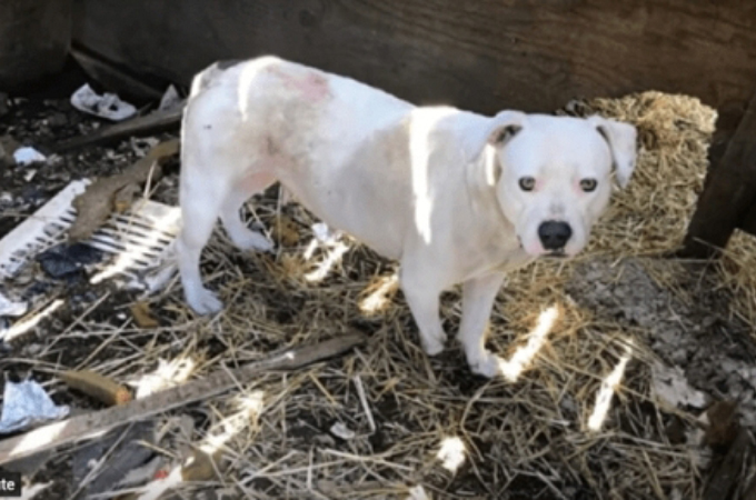 飼い主の死後、ずっと鎖に繋がれていた犬。鎖が足に絡まり、命を繋ぐため自ら噛みちぎる。