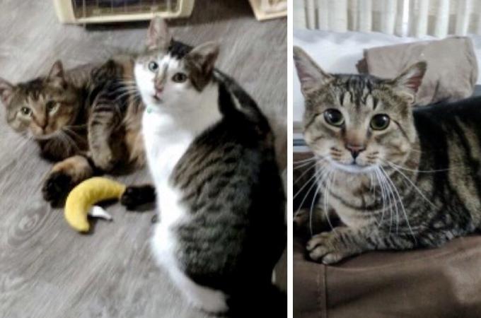 FIV陽性と診断された猫を引き取った家族。しばらくして再び家族は保護施設を訪れる。その理由とは。