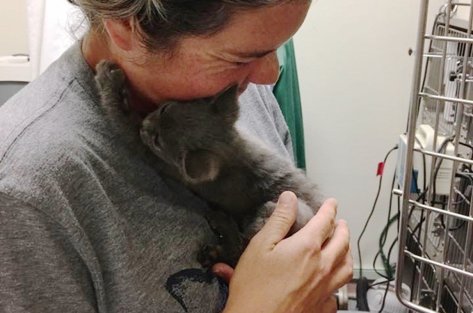 高速道路でうずくまっていた子猫を救出した家族。子猫は家族へ感謝の気持ちを表し、その後、元気を取り戻す。