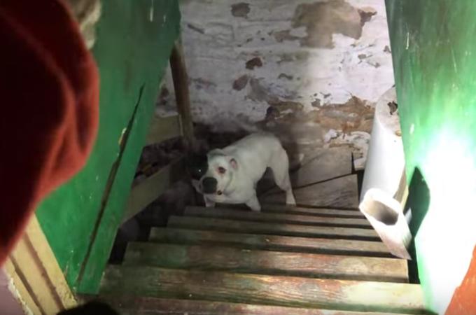 中古住宅を買った男性に発見された地下室に繋がれていた犬。人に触れる喜びを表す様子に胸が締め付けられる。