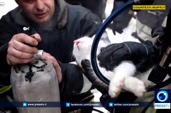 火事によって呼吸ができない猫を心肺蘇生法によって助けた消防士。その一部始終がこちら。