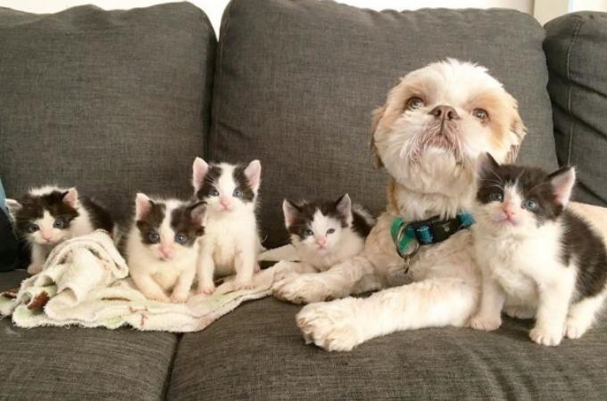 3本足の猫をお世話して以来、70匹以上もの猫たちを育ててきた、まるでみんなのお父さんのような犬。