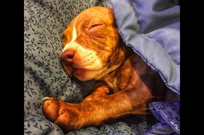 ネズミと見間違うほど小さな犬。獣医には「長生きできないだろう」と宣言されるも、元気に今を生きる。