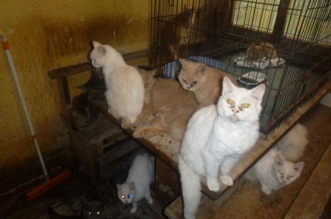アパートの一室で73匹の猫を飼育放棄した老夫婦。その中には深刻な病を患い安楽死をせざるを得ない猫も。