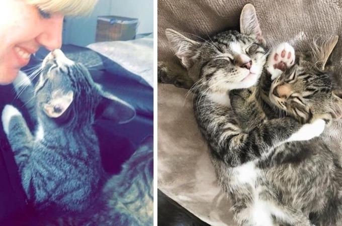 兄弟の猫は離れ離れにならないように、ある作戦をして、同じ家族として迎えられ大成功を収める!