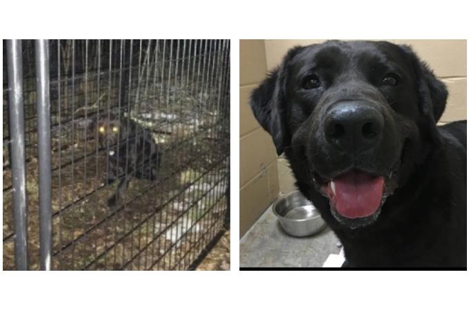 首輪をつけた犬が森の中で発見され、保護した結果、その経緯に驚きの事実が。