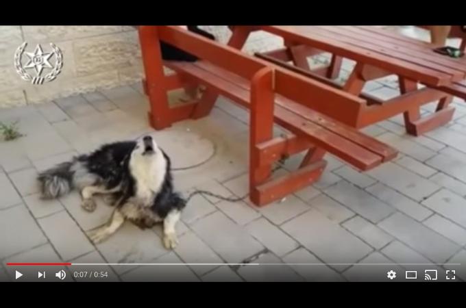 「うちの犬なら歌えるはず!!」迷子犬の確認方法が斬新すぎる!!