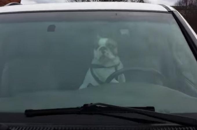 車内にひとりにしないで!車に残された1匹の犬が懸命に飼い主に訴える。