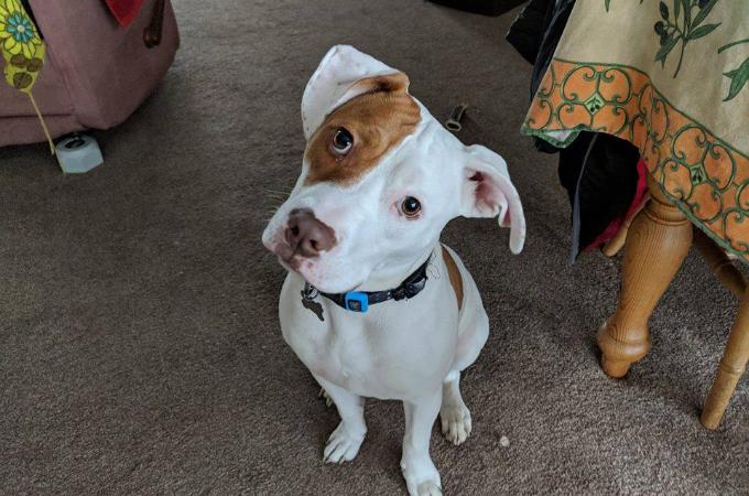 生まれつき耳が聞こえない犬。それが原因で5回も捨てられるも、素敵な家族ができたことで驚きの才能を発揮する!