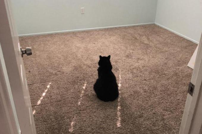 ルームメイトがさった部屋を見つめる1匹の猫。その猫の背中から感じられる寂しさに思わず涙。