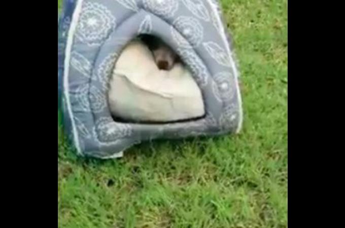 「犬捨て公園」のテントの中で怯えた状態で発見された子犬。保護されたその後とは。