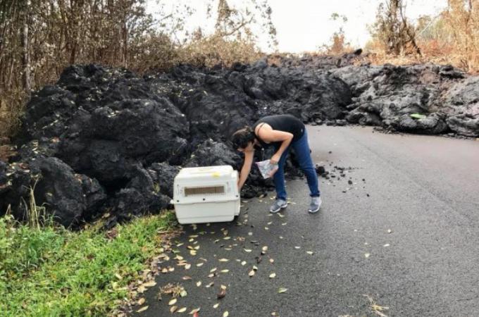 ハワイの噴火による溶岩から危機的に救出された犬。