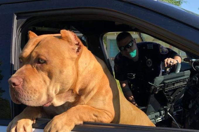 「凶暴な犬がいる!」通報を受け駆けつけた警察官が出くわした大きな犬。恐る恐る近づいて見ると・・。