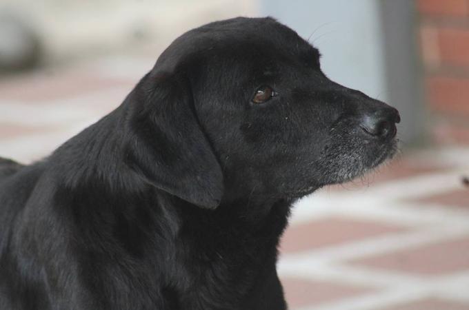 売店のクッキーが欲しい犬。普段からお客さんの行動を見ていた犬がとった行動とは!