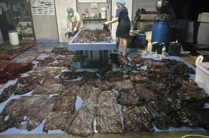 衰弱した状態で発見され、その後、死亡したクジラの胃から大量のゴミが。深刻な海洋汚染とは。